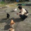 猫に主を譲った犬、猫の野望