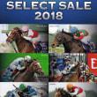 【セレクトセール2018(Select Sale、1歳&当歳)】の「上場馬名簿」が発行!