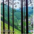 登山道の風景 Ver.2