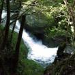 木漏れ日を浴びながらの森あるき【屋久島白谷雲水峡ガイドツアー】