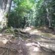高尾山 <健康登山> 第一回