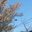 空中に浮く鳥