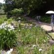 菖蒲池:広島市植物公園