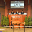 JRA競走に勝ったセール出身馬紹介(2018/11/17-18、ヒラボクラターシュなど30頭)