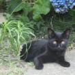 黒猫ちゃんがいっぱい