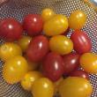 黄色いトマトと 白いトウモロコシ