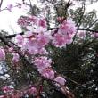春のポカポカ陽気