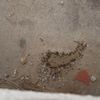 蟻君の集団