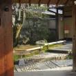 早春の光の中のお茶室・双樹庵と新社会人の決意