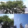 9月6日(木)今日の北川桜