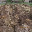 トマト用の畝づくりに取り組む