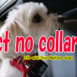 Dog barking prevention collars  without effect 躾首輪効果無し