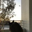 日の出も早く。