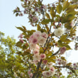 4月2日 ◆道場長ブログ…【拳流院 雷禅のヒトリゴト ー 2018年の花見 ー】