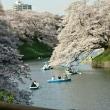 従姉妹からLINEで届いた桜の写真