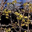石光寺~2月の花々・2018.2.9