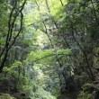 紅葉前の渓谷