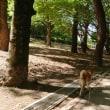 夜宮公園日本庭園散歩 180526
