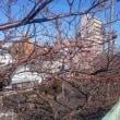 2019年 いろいろな芽が吹き始め、春が近づいてきました。