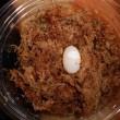 カブトニオイガメ水中産卵