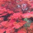 見とれるほどの紅葉でしたね。