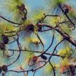 『季節の風景』 大王松