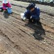 サトイモ収穫第一弾 50kgも採れたよ!