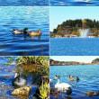 千波湖の鳥