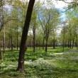 こんなようすです ゴールデンウィーク~山野草