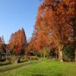 晩秋の庄和公園
