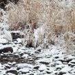 きょうは、これですね、雪景色