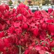 四季2017(10) 紅葉・黄葉が織りなす様が美しい(1)