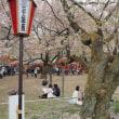 高遠城址の桜 ・ 長野県伊那市