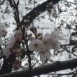 春眠暁を覚えず! カボチャの「ニョッキ」がにょきにょき~♪