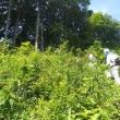 高谷山の草刈りに参加しました