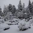 雪だ、大雪