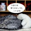猫背になったシロクマくん