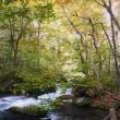 奥入瀬渓流の紅葉情報 ~ 2018年10月19日は 紅葉の始まりでした。(東北プチ旅-1)