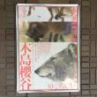 木島櫻谷の動物画@泉屋博古館