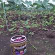 キンチョーの 渦に守られ 農作業