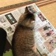 新聞を読んでいると〜〜