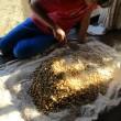 手作り醤油の作り方 醤油麹の仕込み