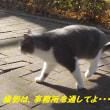 上野の子パンダ観覧の抽選倍率が144倍だって・・・^^;;