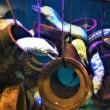 水族館で涼しい気分に!楽笑オリジナル妖怪日記309回目投稿
