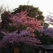 春いっぱいの2泊三日・・・