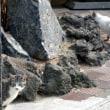 猫ゆったり(=^・^=)  ~世界遺産富岡製糸場界隈~