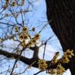 【京都園芸倶楽部Facebook】先週の植物(2018年2月4日〜10日)