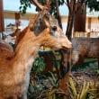 三重県民の森の自然学習展示館