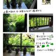 緑が大好き (^ ^)