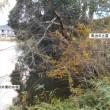 城の会旅行(兵庫県)(12)篠山城(5)